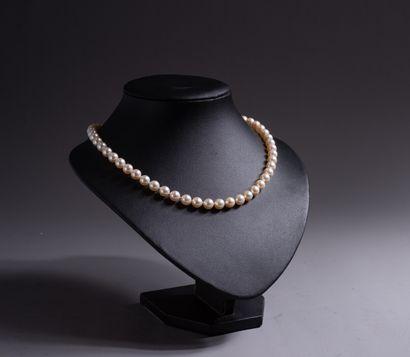 COLLIER DE PERLES CHOKER composé de 53 perles...