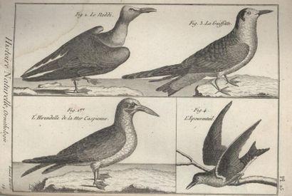 Histoire naturelle illustrée. Album. Reliure...