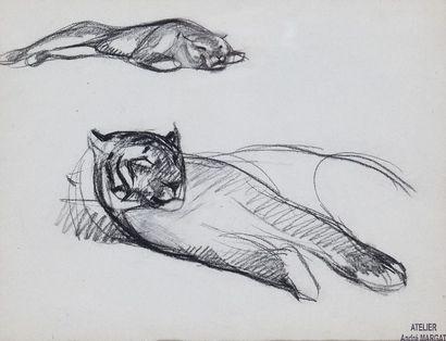 André MARGAT (1903-1997)  « Etude de tigre...