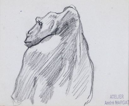 André MARGAT (1903-1997)  « Etude de gorille...