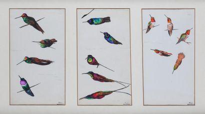 André MARGAT (1903-1997)  « Etudes de Colibris...