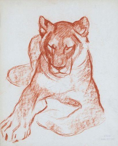André MARGAT (1903-1997)  « Etude de lionne...