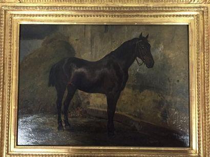 Louis Van KUICK (XIXème siècle)