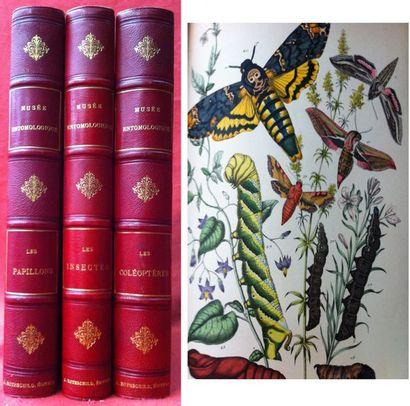 [COLLECTIF] Musée entomologique illustré....
