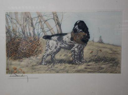Léon Danchin ( 1887-1938). Engraving representing a setter clutching his prey in...