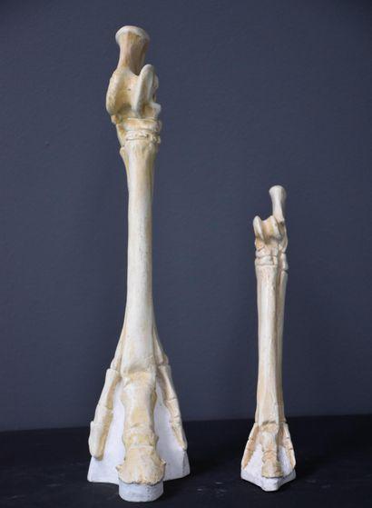 Plâtres d'anatomie pour école vétérinaire...