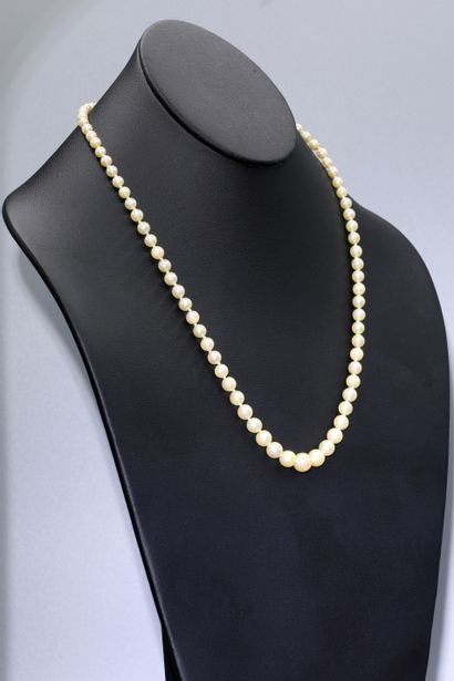 Collier de 81 perles de cultures en chute,...