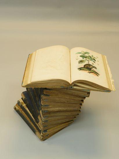 Dictionnaire pittoresque d'histoire naturelle...