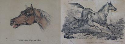 Carl VERNET (1758-1836), d'après.  Le poulain...