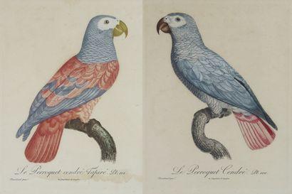 D'après Jacques BARRABAND (1767-1809)