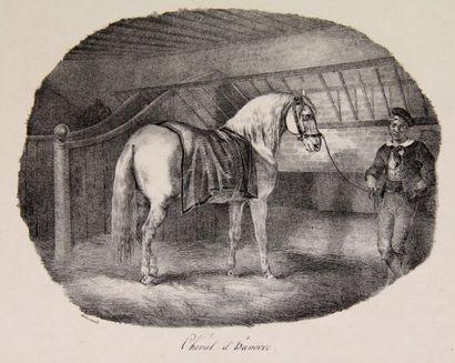 Théodore GERICAULT (1791-1824)  Cheval d'Hanôvre...