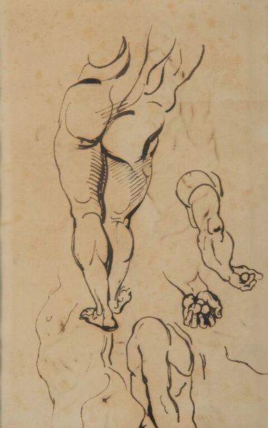 ERRATUM : Etude d'après Hercule Farnèse...