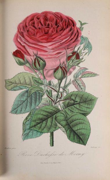 *[BOTANIQUE] ANONYME Roses et Rosiers par...