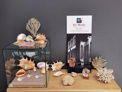Lot de minéraux et coquillages divers à vendre...