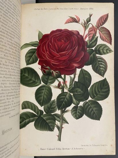 [Botanique]. Ensemble de 3 ouvrages.  1....