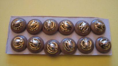 12 boutons avec tortue en métal doré monté...