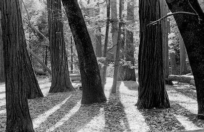 "Estelle BOHL  http://www.estellebohl.com ""Yosemite"", tirage 2013.  Tirage Fine..."