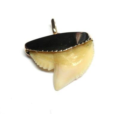 Pendentif or jaune serti d'une dent de requin...