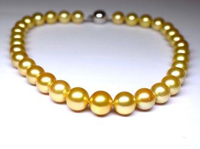 Important collier en perles de couleur Gold...