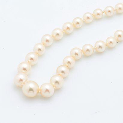 Collier d'un rang de perles de culture en chute, le fermoir en or gris 18 carats...