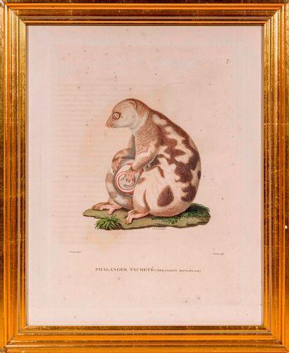 Jean Louis Denis COUTANT (1776 - ?)