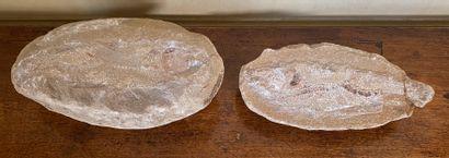 Fossile de poisson  6 x 22 cm  Accident