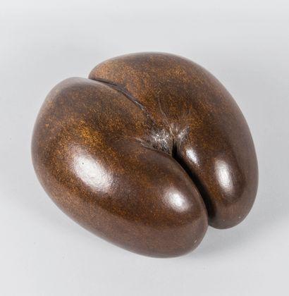 Coco fesses (lodoicea maldivica), espèce...