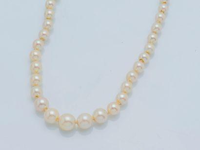 Collier de perles de culture en chute, la...