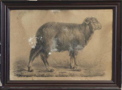 L. LEJARS, XIXème siècle Mouton Dessin, signé...