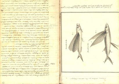 ARMEE DES PRINCES ARMÉE DES PRINCES. Manuscrit de 350 pp. in-folio. ½ reliure de...