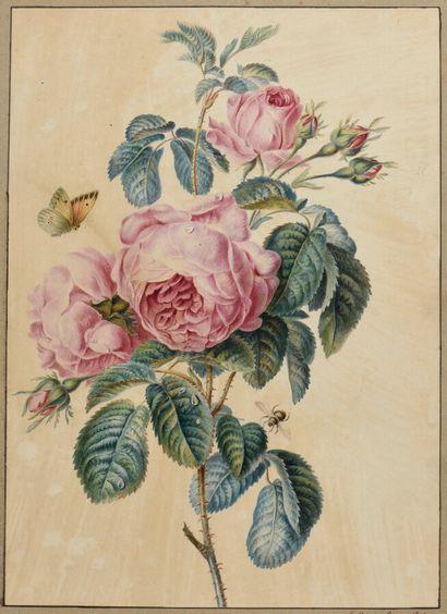 Ecole FRANCAISE du XIXème siècle  Roses et...