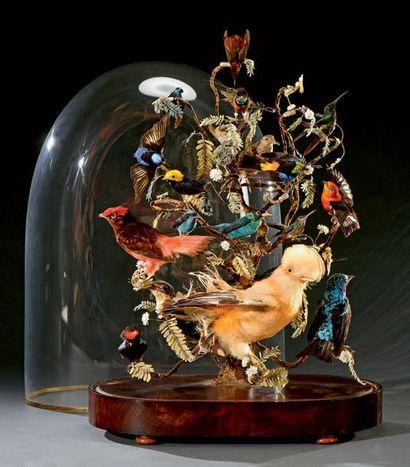 Ensemble d'oiseaux exotiques naturalisés,...