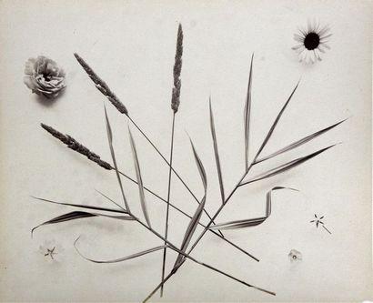Études de fleurs et de végétaux, vers 1860...