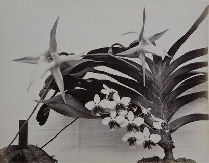 Études de fleurs et de végétaux, vers 1860 Remarquable suite de 39 tirages albuminés...