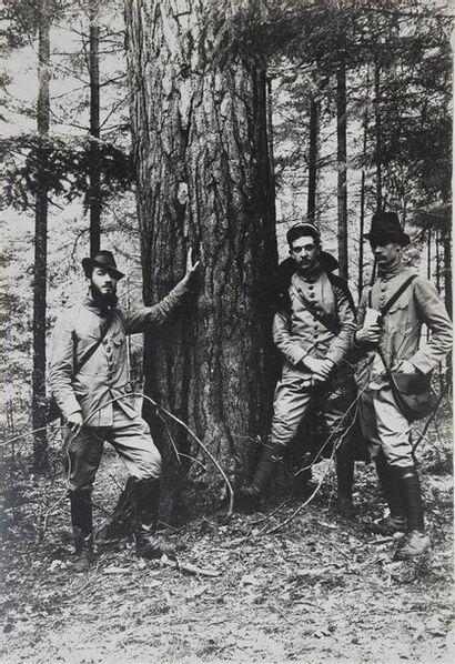 Sylviculture, Service des Eaux et Forêts,...