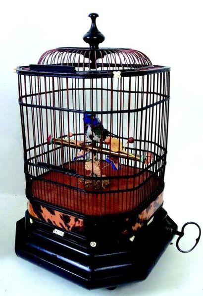 -   «Cage à «oiseaux» Cage chinoise en bois et écaille de tortue avec un oiseau...