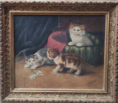 BUISSON (XIXeme siècle) Trois chatons jouant...