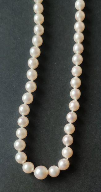 COLLIER un rang de perles de culture dégressives, fermoir et chaine de sécurité...