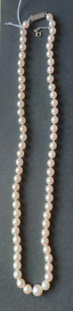 COLLIER un rang de perles de culture dégressives,...