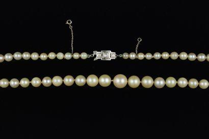 Collier de perles de culture en chute. Fermoir en platine serti de 3 diamants taille...