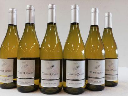 6 bouteilles de Côtes du Rhône Blanc. 2013....