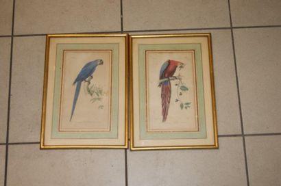 Paire de planches d'ornithologie, représentant...