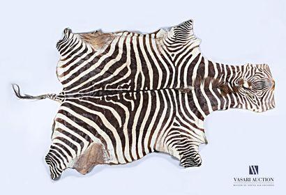 Peau de zèbre (Equus quagga, non réglementé),...
