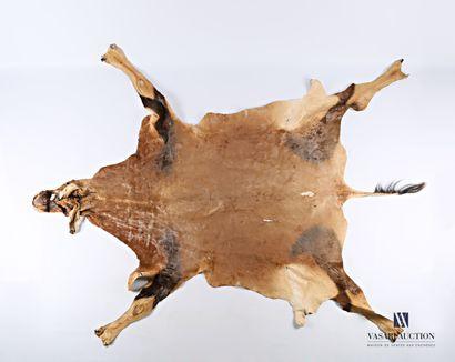 Peau de damalisque topi (Damaliscus korrigum,...