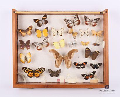 Tiroir entomologique contenant vingt trois...