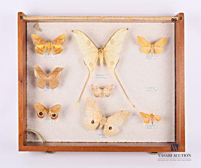 Tiroir entomologique contenant huit papillons...