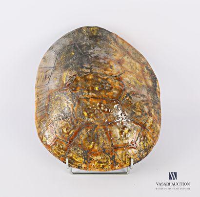 Carapace de tortue (factice) en grés vernissé...