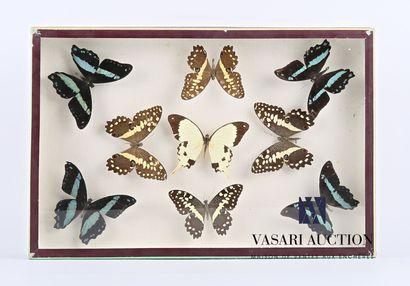 Boîte entomologique vitrée contenant neuf...