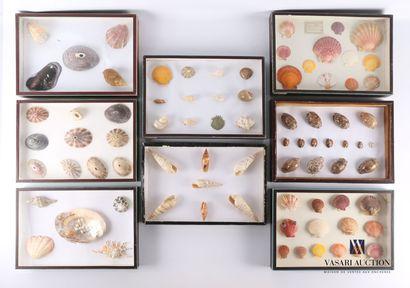 Suite de huit boites contenant des coquillages...