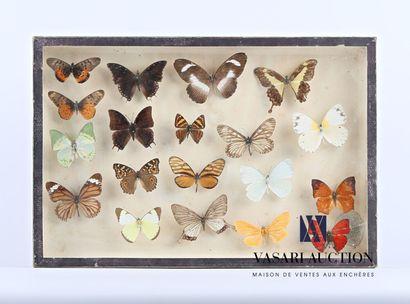 Boîte entomologique vitrée contenant dix-huit...